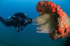 Honeycomb_moray_diver_Siv_wreck_Sifah_180516_2