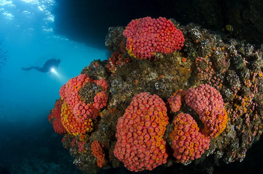 coral_diver_larrys_dive_heaven_triton_bay_291116_1