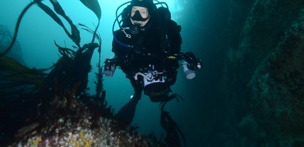Scuba diving in Saltstraumen – The worlds strongest tidal current